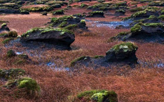 swamp, трава, mossy, скалы,