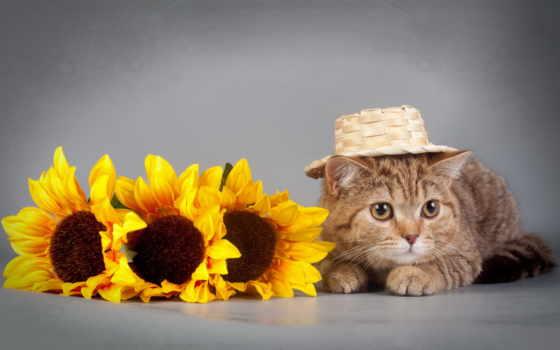 подсолнухи, кот, cvety, коты, кошки, zhivotnye, разное, золотые, котята, коллекция,