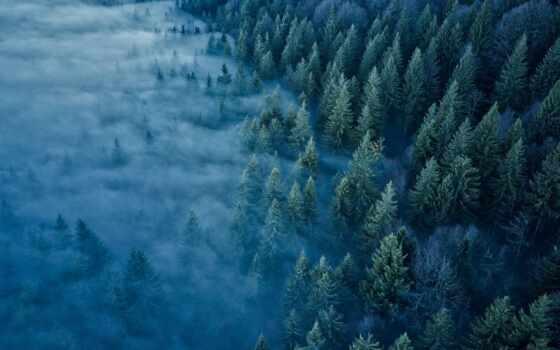 jus, франция, fore, гора, дерево, туман, anime, design, arklight, фея, tail