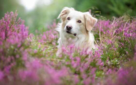 собака, цветы, summer, white, animal, portrait, cute, side, смотреть
