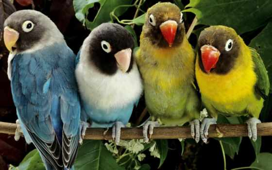 попугаи, животные