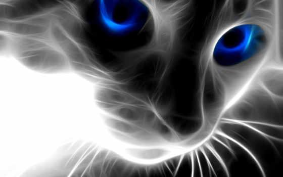кот, глазами