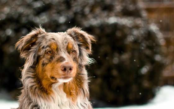 изображения, полноразмерного, животные, dog, оригинал, загрузить, загрузки, фото, друг, взгляд, jpeg,