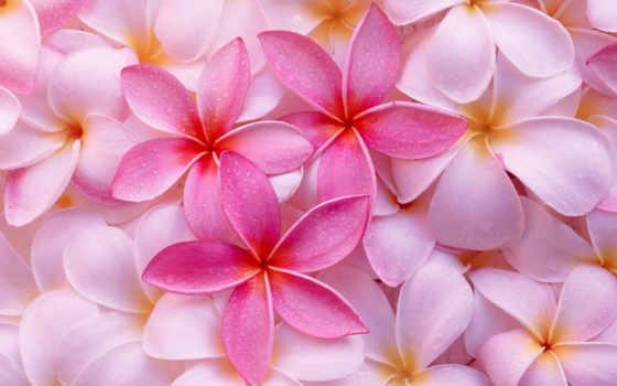 цветы, красивые, stunningly