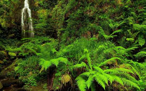природа, ручей, лес, страница, pic,