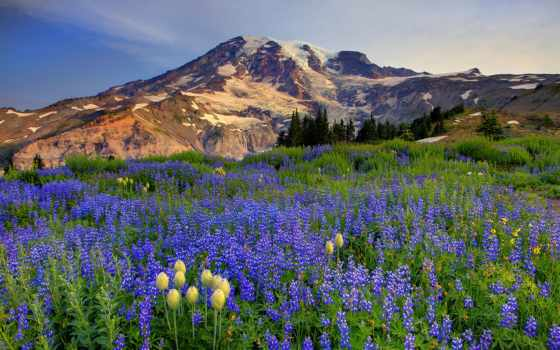 park, national, mount, rainier, рейнир, сша, located, части,