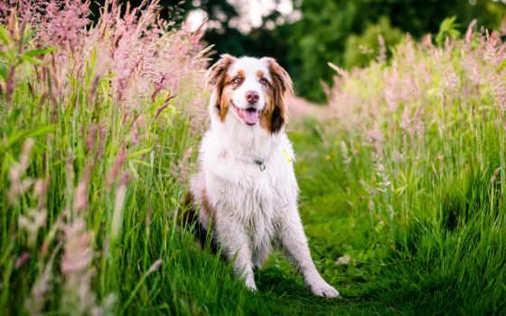 iphone, собака, пятнистая, zhivotnye, природа, elvisio, трава,