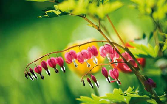 макро, капли, роса, цветы, cvety, розовый, лепестки, бутон,
