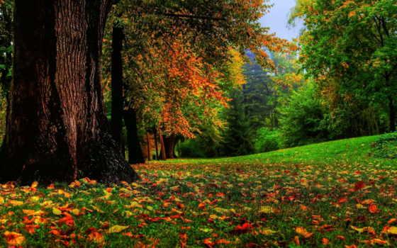 природа, лес, яndex, осень, коллекциях, ukraine, karasova, nadia, вязание,