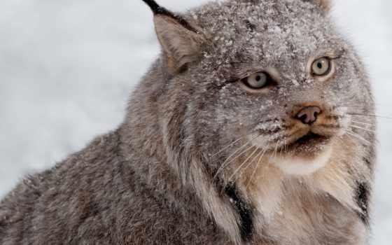 zhivotnye, коллекциях, яndex, кошки, качества, высокого, красивые, кот,