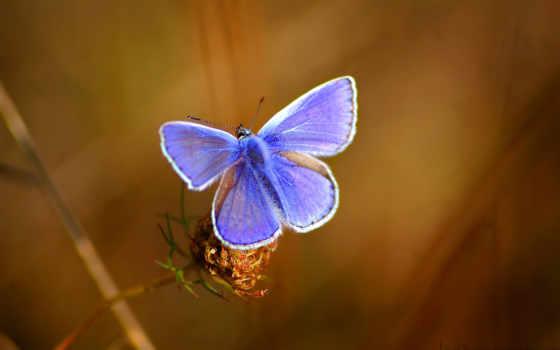 бабочка, красивый, фото, zaryaditsya, positive