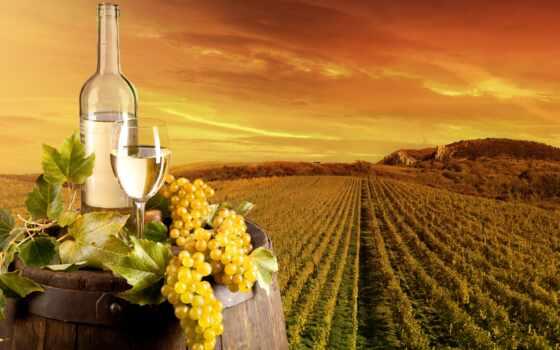 вино, вина, watch, вакансия, upakovschik, como, рф, product, glass, avit, desire