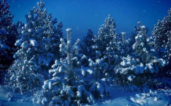 зима, снег, деревья, елки, синий, christmas, картинка, природа,