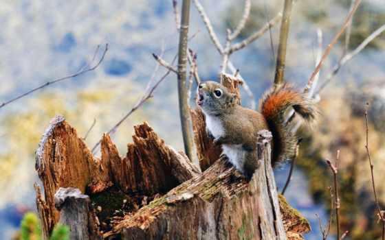 белки, stump, природа, winter,