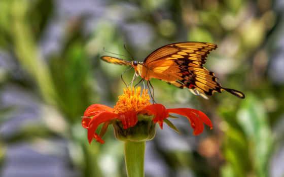 разных, бабочка, разрешениях