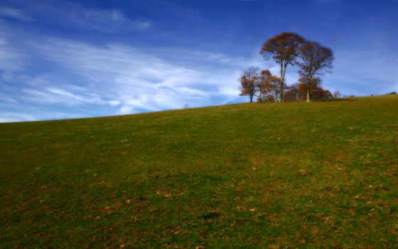 луг, hill, дерево