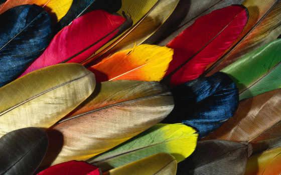 попугаи, перья, перо, разноцветные,