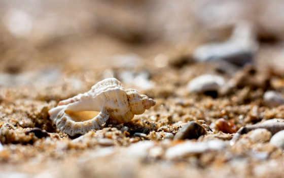 песочница, страница, камни, пляж, галечный, дешевые, possible, ракушки, спа, декоративные, тематика,