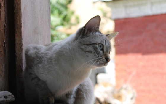 кот, окно, природа, которых, всех, улица, есть, тег,
