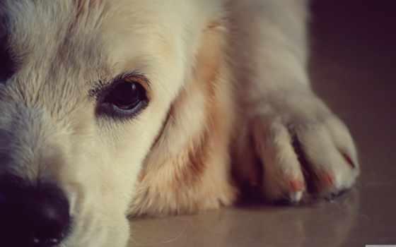 mascotas, que, del, veterinaria, para, día, las, mascota, los,