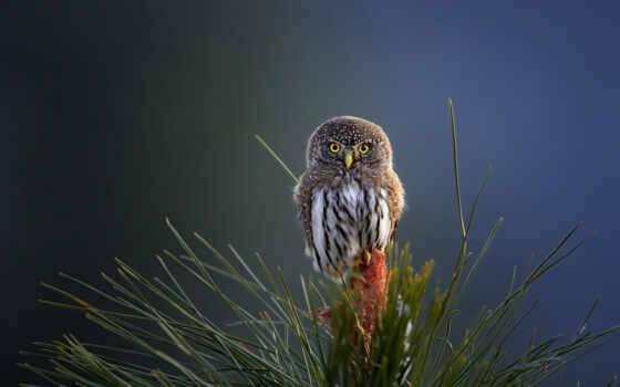 сова, птица, hawk, природа, april, дерево, тематика, branch