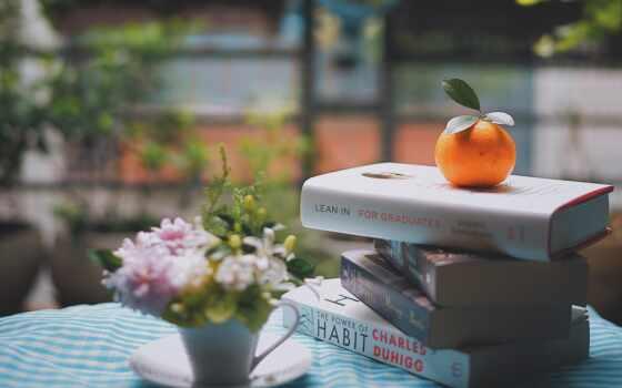 книга, свет, reading, tangerine, цвета, mandarin, цветы, different, растение, parallax, норт