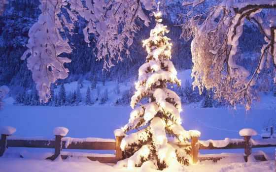 winter, дерево, снег