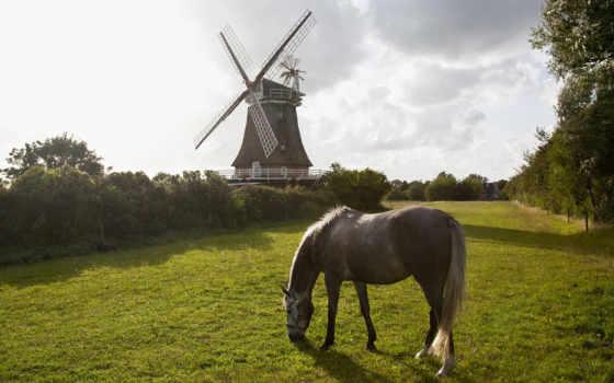 horses, лошадь, природа