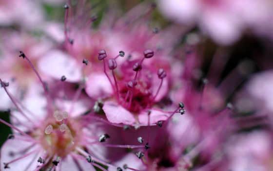 cvety, цветов, розовый, фиолетовые, фиолетовых, природа, лепестки,