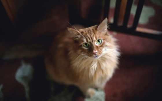 кот, eyes, зелёный, video, red, смотрит, cats, desktop,