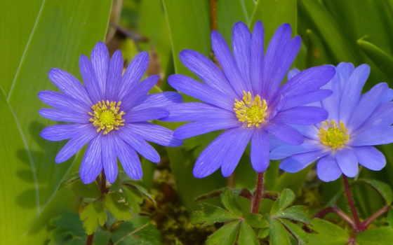 cvety, весна, макро, фотографий, liveinternet, растение, цветы,