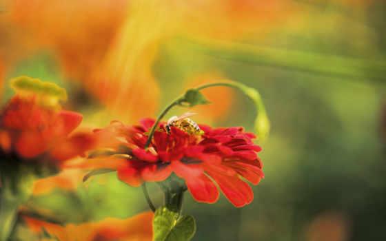 red, цветы, размытость, fajne, śmieszne, obrazki, zdjęcia, фотки, мемы, юмор, пчелка,
