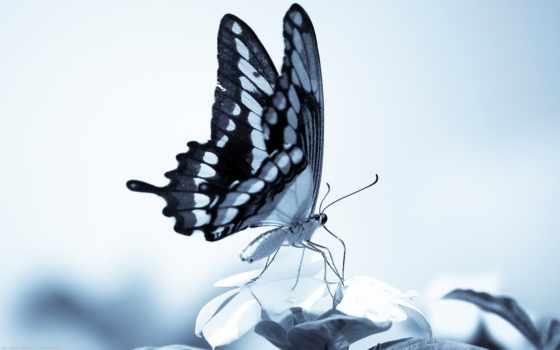 насекомые, бабочка, бабочки, сидит, загружено, растения, коллекция, уже, лучшая, papilio,