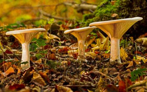 mushroom, color, площадь, иркутск, wonderful