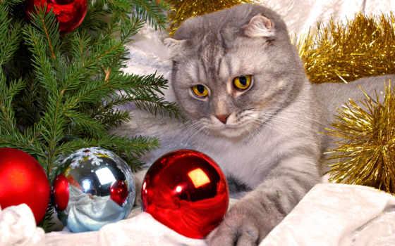 новогодние, god, котенок