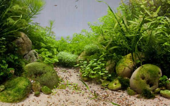 аквариум, добавляем, описание, разрешений, высоком, разделе, картинкам, уют, водоросли,