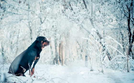 winter, собака, друг