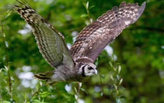 сова, птицы, полет, branch, птица, крылья,