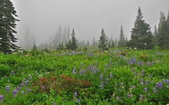 цветы, туман, поляна, eli, trees, природа, landscape, густой, счастье, have, дачу,