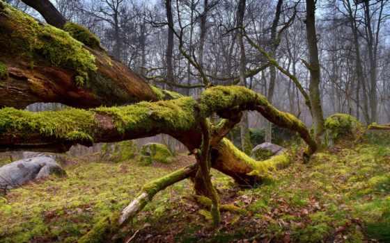 mossy, hills, природа, desktop, mountains, high, tapety,