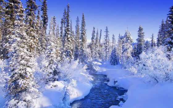 природа, коллекция, снег, красивые, winter, лес, яndex,