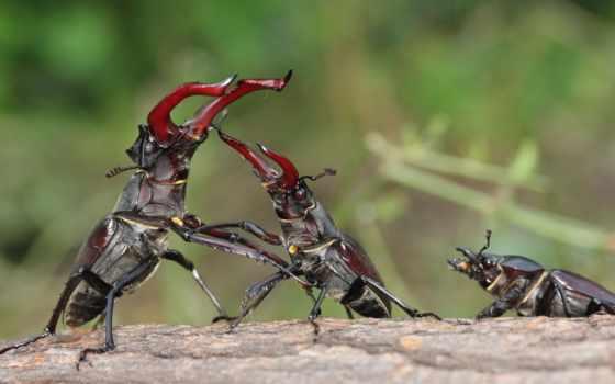 взгляд, интересные, большой, следы, жук, лань, европы, жуки, жуков, жука,