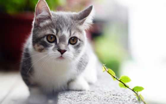 animals, кот, knowledge, природа, cats, short,