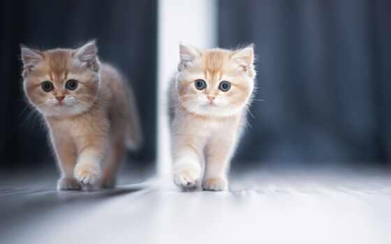 зеркало, отражение, кот, сентябрь, котенок, red, kitty, браун, тематика