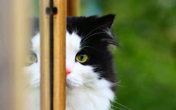 кошка, окно