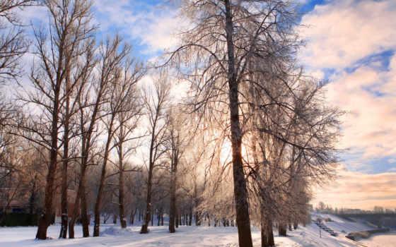 деревя, снег, winter