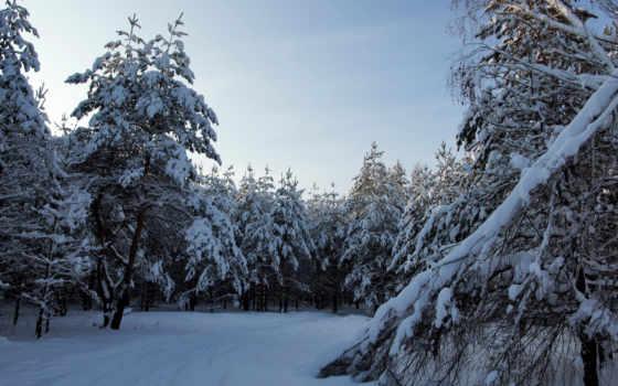 winter, лес, снег, landscape, hintergrundbild, invierno, descargar, relaxing, природа, пейзажи -,
