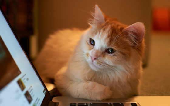 cat, ноутбук