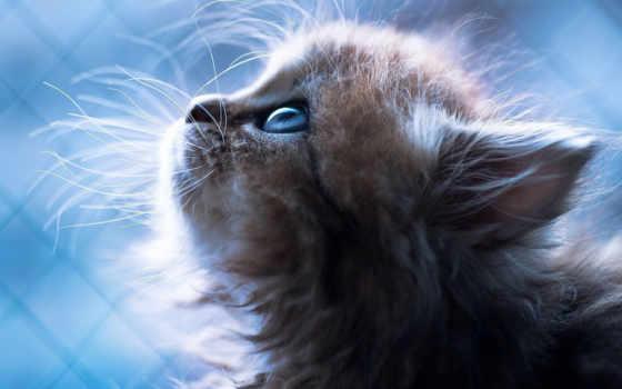 котята, котят, милые, об,