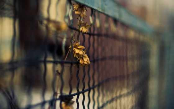 разное, забор, сетка